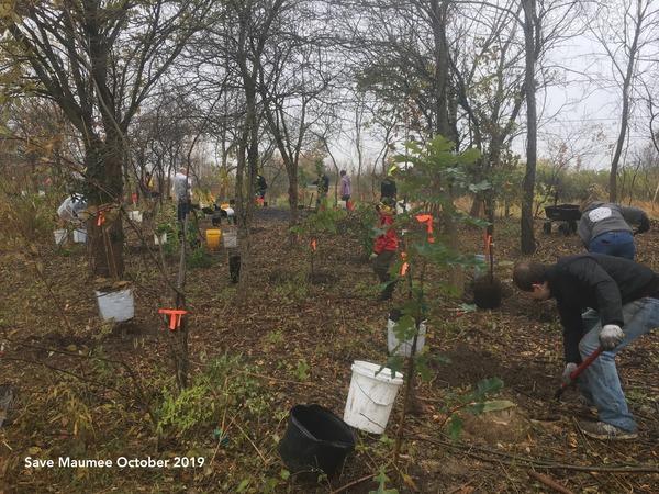 plant_a_tree_2019_Save_Maumee 3